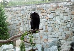 Bears_61811c