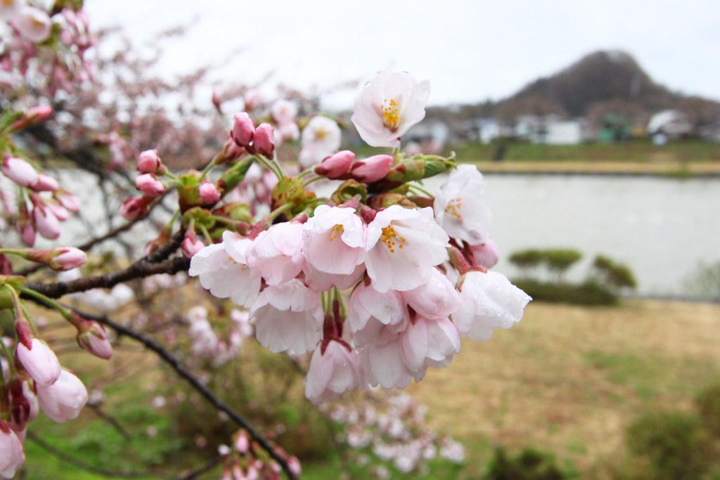Tohoku Trip 1st day in Akita prefecture, Kakunodate (16)