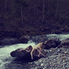 A New Being (harriet.bols) Tags: water river woods curves inspired evolution growth creature bodies brookeshaden