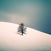 Lonely Tree (Cedpics) Tags: winter snow tree nature montagne hill neige arbre colline