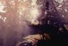 the forest (.ultraviolett) Tags: china lighting wood light sun beijing flare