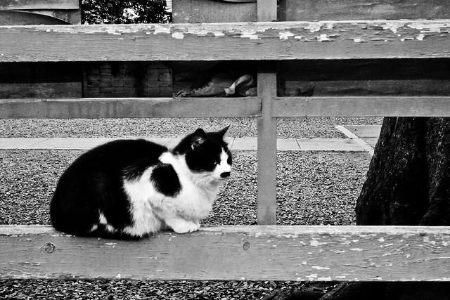 Today's Cat@2011-03-27