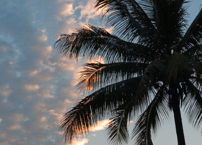 sunset palm small