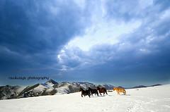 (Rawlways) Tags: snow landscape wildhorses scenics