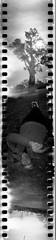 Caught me napping. (QsySue) Tags: park family sky blackandwhite tree me clouds fun susan centralpark toycamera 35mmfilm orangecounty huntingtonbeach ilforddelta400 spinner expiredfilm sprocketholes 360degreeview developedathome spinner360 lomographyspinner360 spinnercamera panoramaonsteroids