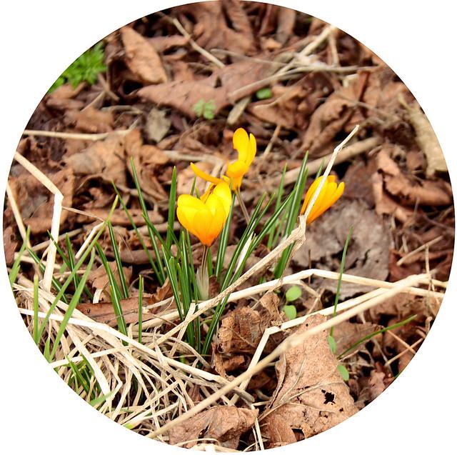 Dagens blomma