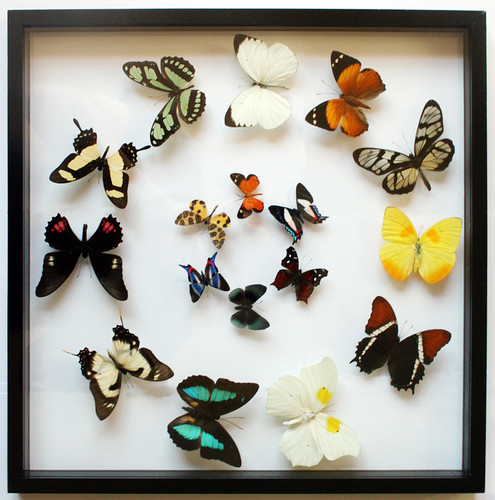 Butterfly Art and Pictures for Home Decor: Memorial Day Sale on ...