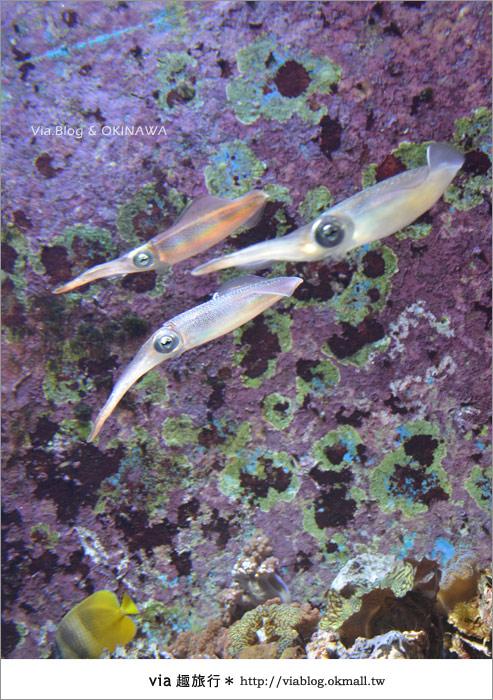 【沖繩景點】美麗海水族館~帶你欣賞美麗又浪漫的海底世界!18