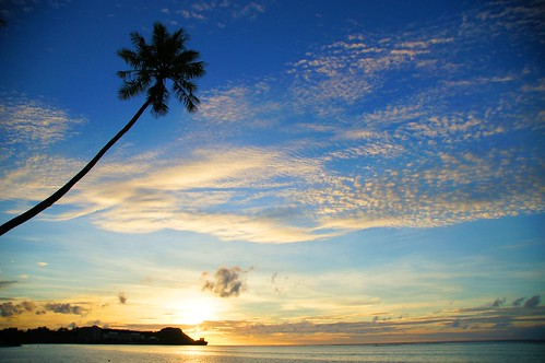A55-CZ-Palm-Sunset