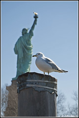 New-York, Liberty Island (march 2011) -  Jrme Cousin (Jrme Cousin) Tags: new york city usa apple statue brooklyn america de liberty big nikon state manhattan seagull united liberte mouette d5000