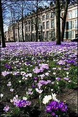"Flowers in The Hague • <a style=""font-size:0.8em;"" href=""http://www.flickr.com/photos/45090765@N05/5611046466/"" target=""_blank"">View on Flickr</a>"