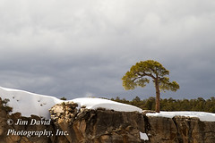Solitary Tree on Cliff (jim_david) Tags: winter arizona snow cold tree rock grandcanyon stock solitary