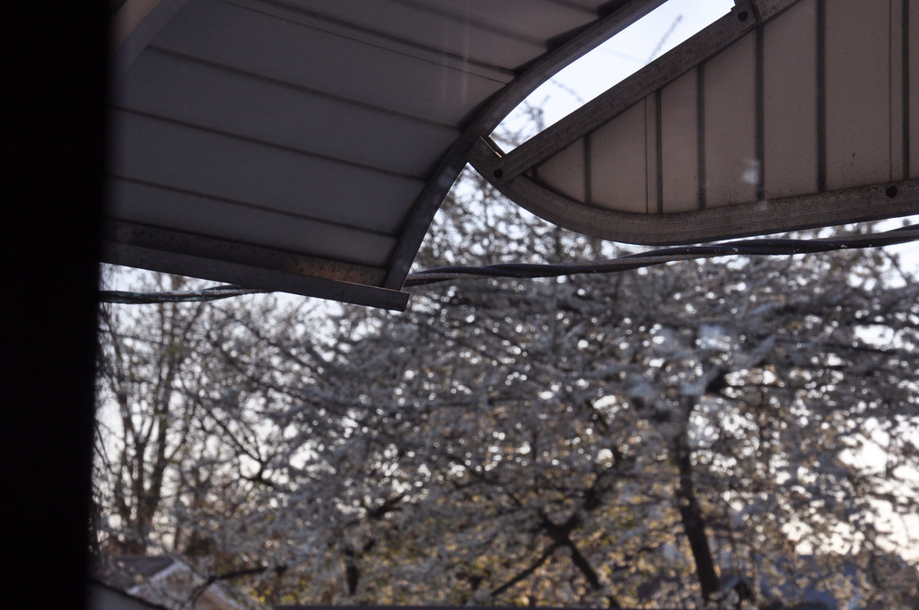 awning & blossoms