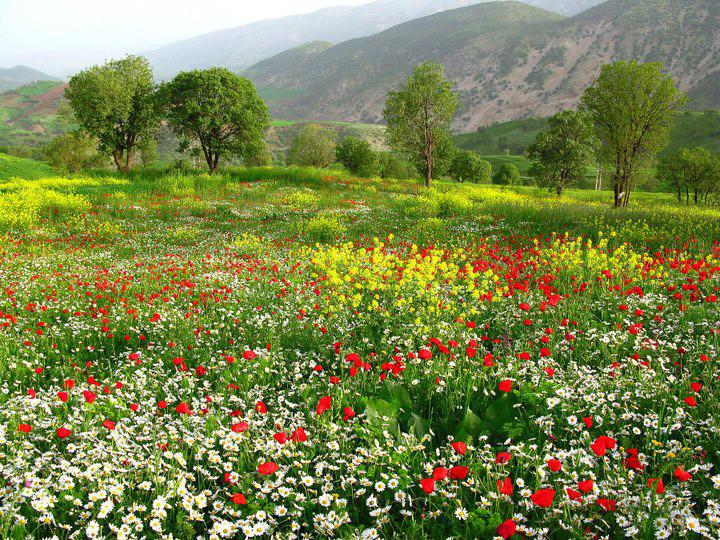 جمال الطبيعة كردستان العراق 5619194637_289b200463_b.jpg