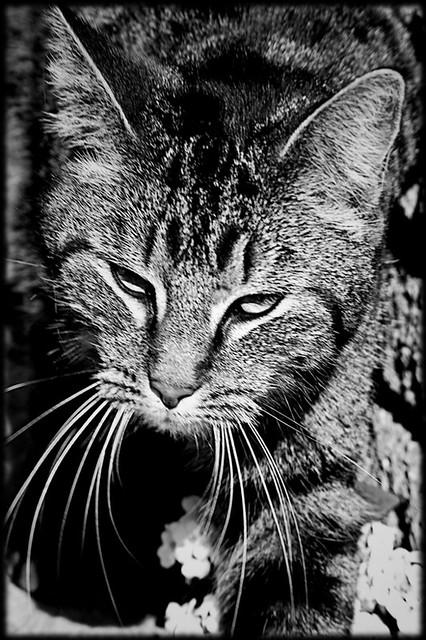 Urban predator