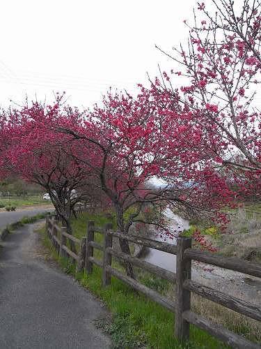 春の花々@明日香村-34