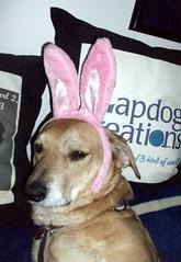 Sophie_bunny_411b
