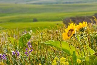 Wildflower Heaven...