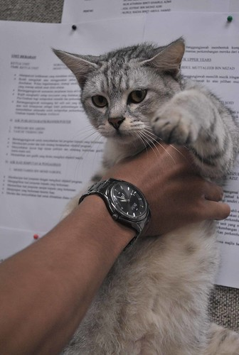 wallpaper kucing. wallpaper kucing comel. wallpaper kucing comel. wallpaper kucing comel.