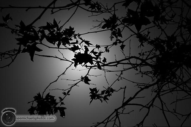 Mira Mesa at Night 41611 © Michael Klayman-002