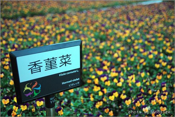 2遊台北花博_213