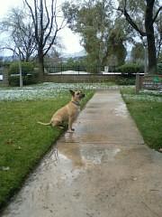 Photo086.1.jpg - Snow Valencia