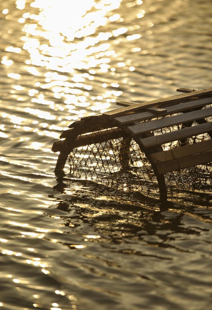 Cage à l'eau
