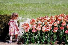 Secret Escape (JoelleW) Tags: flowers colorful tulips blooms sundress skagitvalleytulipfestival tulipfestival littlegirls brilliantcolors skagitcounty tulipfields
