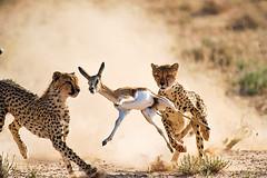 2010最佳动物摄影图片