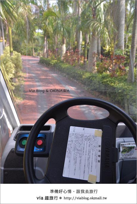 【via的沖繩旅誌】名護鳳梨公園~可愛又香甜的鳳梨樂園!9