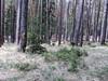 bosco sopra san vito di cadore