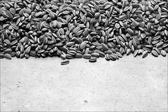 ai weiwei sunflower seeds (loop_oh) Tags: china city uk greatbritain england flower london art loss museum modern lost design cosmopolitan artist gallery unitedkingdom tate britain modernart kunst united great seed kingdom moderne tatemodern seeds kern stadt sunflower gb blume metropolitan ai modernekunst arrest weltstadt metropole themse londen unilever tategallery sonnenblume knstler weiwei grossbritannien sunflowerseeds kerne gallerie londre britannien aiweiwei kuenstler grosbritannien cosmopolitancity