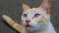 Blue eyes (Jedidi) Tags: blu occhi gatto