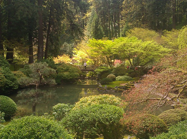 View of a pond surrounded by a variety of maples and evergreens with an arched wooden bridge in the background, at the Japanese Garden
