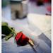 Forgotten rose..