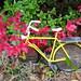 Fern's bike
