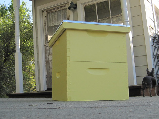 Yellow bee boxes
