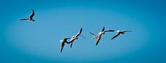 Honeymoon island (Ricymar Photography (Thanks to all the fans!!!!)) Tags: desktop sunset wallpaper art beach birds outdoors island photography flying