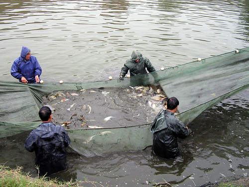 Aquaculture in Henan, China. Photo by Kam Suan Pheng, 2008.