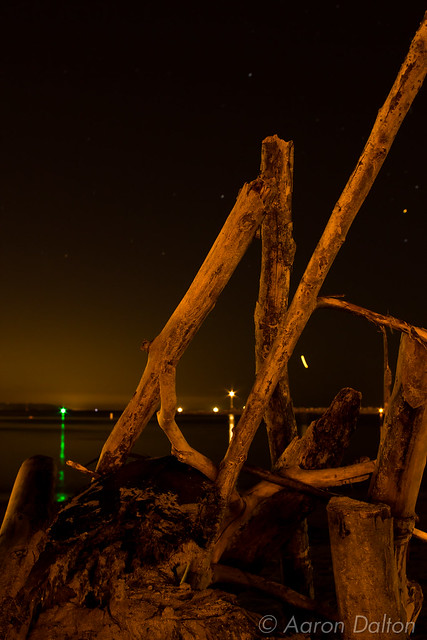 Driftwood Scuplture at Night