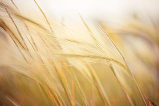 160/365 June 9 - Tallgrass