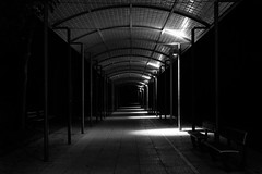 271/365: Parc Saint-Pierre de nuit (Kelvin P. Coleman) Tags: canon powershot amiens night nuit urban urbain park parc path sentier walkway promenade alley alle sheltered abrit 365 roof plafond tunnel structure light bw noiretblanc schwarzweiss blancoynegro vanishingpoint leading covered labri bench banc lowkey