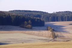 (:Linda:) Tags: germany village thuringia soil veilsdorf conifer erde leite nadelbaum erdboden konifere vorfrhling prespring erdreich ackerboden eichigt