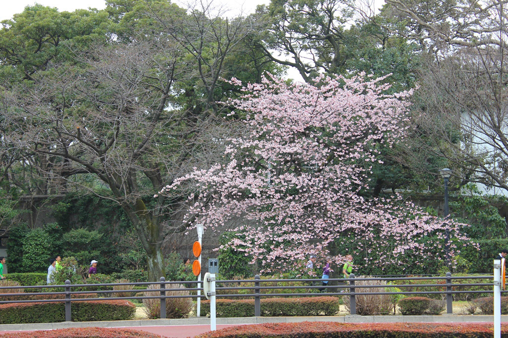 Spring has come (2)