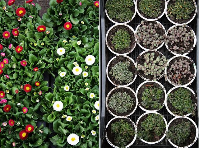 Turgaus augalai2