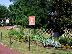 the educational garden near Cox Hall (by: Anne G, creative commons license)