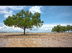 (Louise Denton) Tags: ocean trees sea beach sand mud nt tide australia darwin flats mangroves hdr eastpoint northernterritory quicksand sigma1020mm canon450d