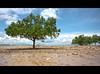(Louise Denton) Tags: ocean trees sea beach sand mud nt tide australia darwin flats mangroves hdr eastpoint northernterritory quicksand sigma1020mm canon450d