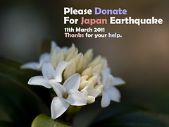Please Donate For Japan Earthquake (Polotaro) Tags: flower macro nature japan pen earthquake olympus donation   tohoku  ep1     tamronsp90mmf28macro1172b donatejp2011