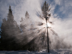 Backlit Tree and Steam (2011) Upper Geyser Basin, Yellowstone National Park, Wyoming (jpaton1963) Tags: winter season nationalpark unitedstates places yellowstone wyoming tours tqm parquenacional uppergeyserbasin rockpaper geocity exif:focal_length=22mm exif:iso_speed=400 frostyfun camera:make=nikoncorporation camera:model=nikond300 hdrpartial exif:make=nikoncorporation geostate geocountrys exif:model=nikond300 exif:lens=120240mmf40 exif:aperture=22 geo:lon=11084202666667 geo:lat=4447287
